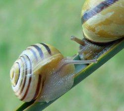 Propositions & avancées dans le forum des mollusques continentaux. Cepaea10