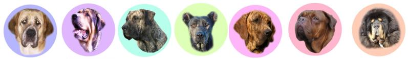 Badge à l'effigie de votre chien Badge013