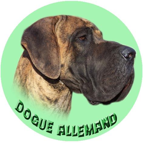 Badge à l'effigie de votre chien Da-bri11