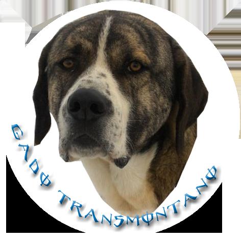 Badge à l'effigie de votre chien Gado0110