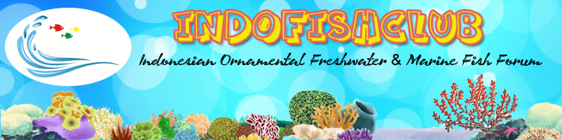Kreatif/DIY(Do it youself) Freshwater Banner10