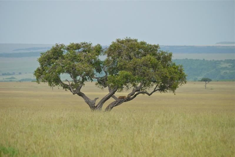Nyota and Moja Masai Mara June 2012 P1030910