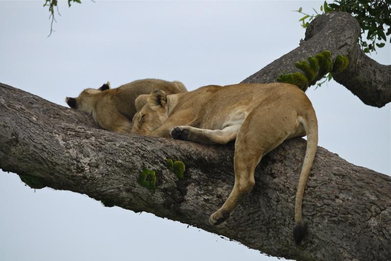 Nyota and Moja Masai Mara June 2012 P1030912