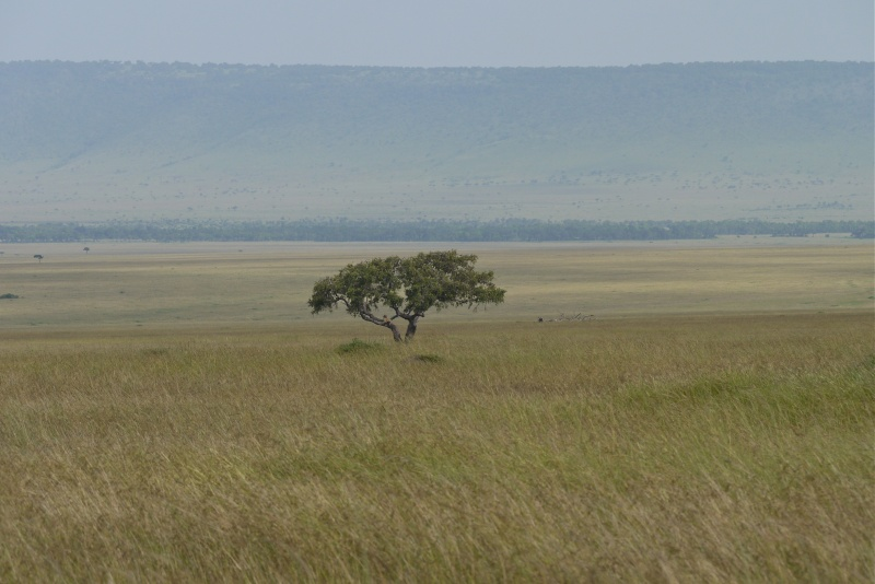 Nyota and Moja Masai Mara June 2012 P1040018