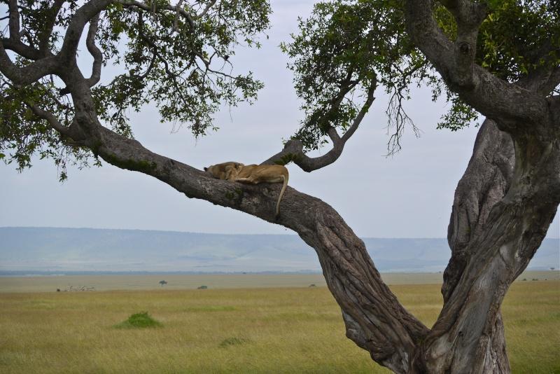 Nyota and Moja Masai Mara June 2012 P1050810