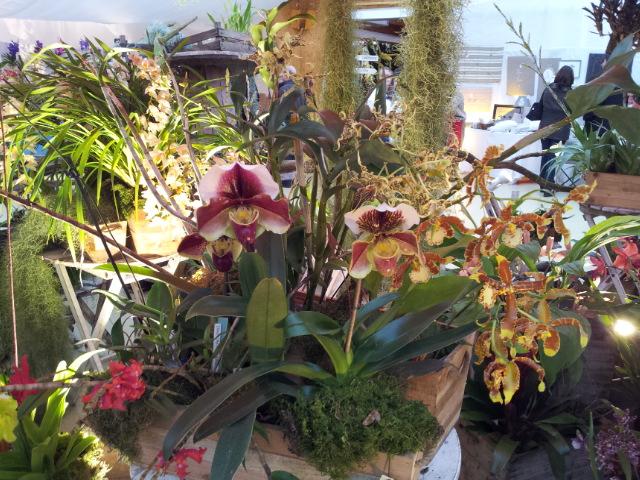 expo orchidée Vervins 20121118