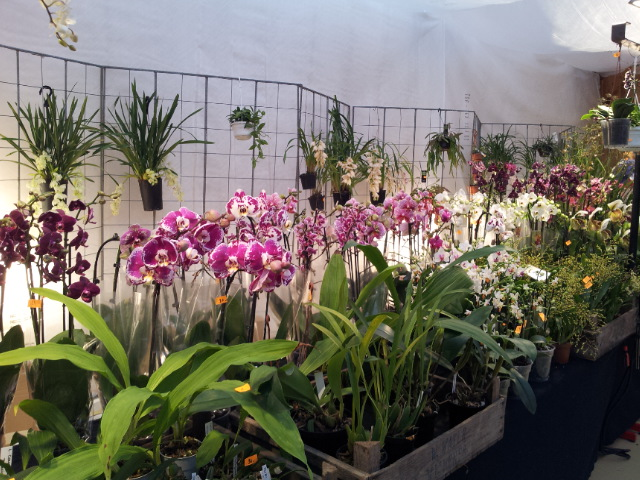 expo orchidée Vervins 20121123