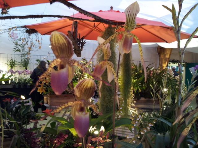 expo orchidée Vervins 20121124