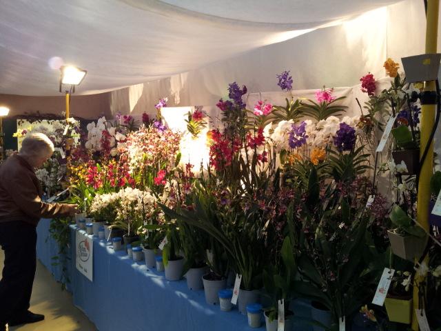 expo orchidée Vervins 20121125