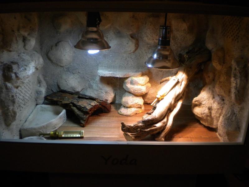 mon premier terrarium !!! Dscn3113