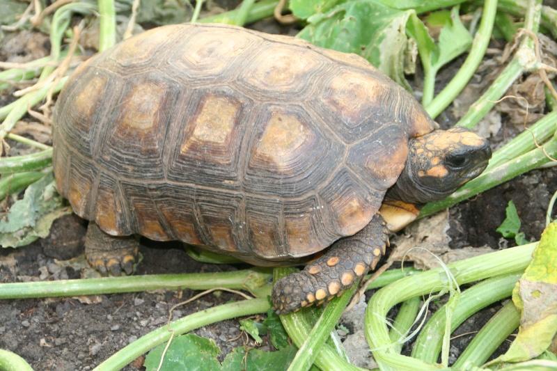 Identification de la tortue de Pipo Img_0610
