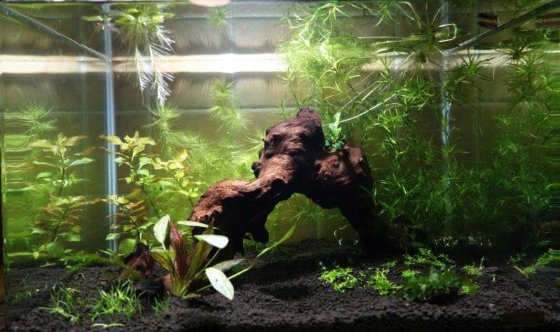 Elevage des killis (Aquarium) Aquari10