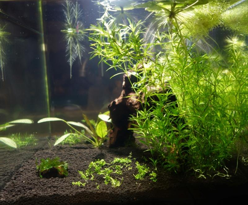 Elevage des killis (Aquarium) Dsc00020