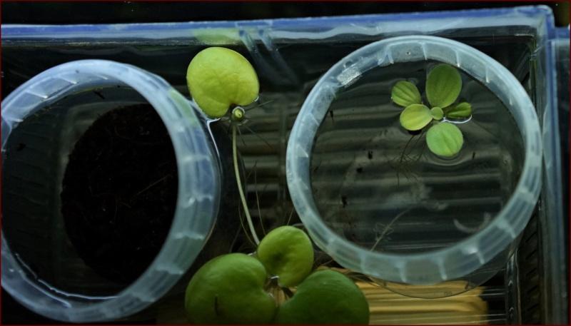 Elevage des killis (Aquarium) Dsc00114