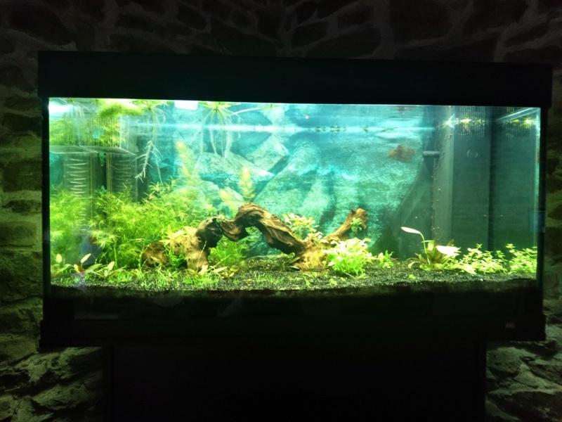 Elevage des killis (Aquarium) Dsc_3311
