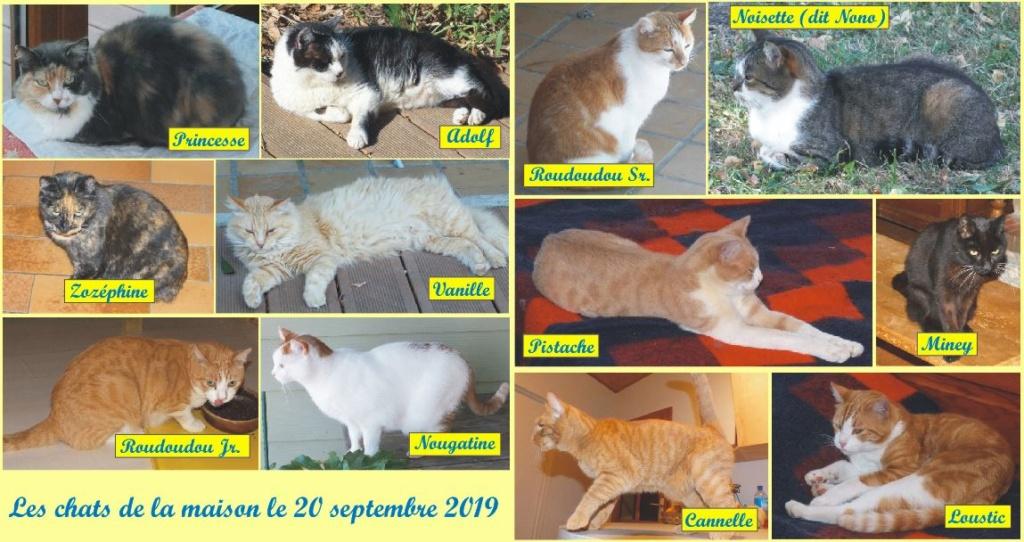 Les chats de la maison... Les_ch10