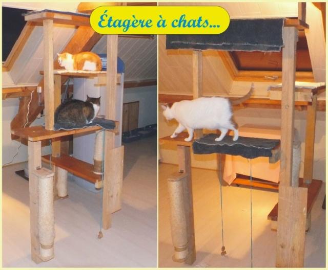 L'arbre à chats est adopté... Zotagz10