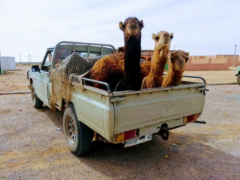 Maroc le sud Drom10