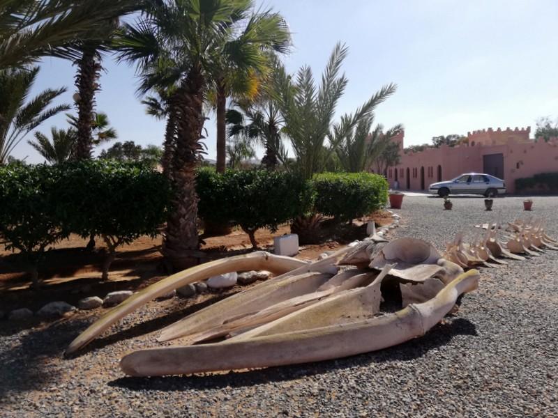 Maroc le sud Fort_b11