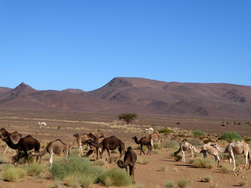 Maroc le sud P1240410