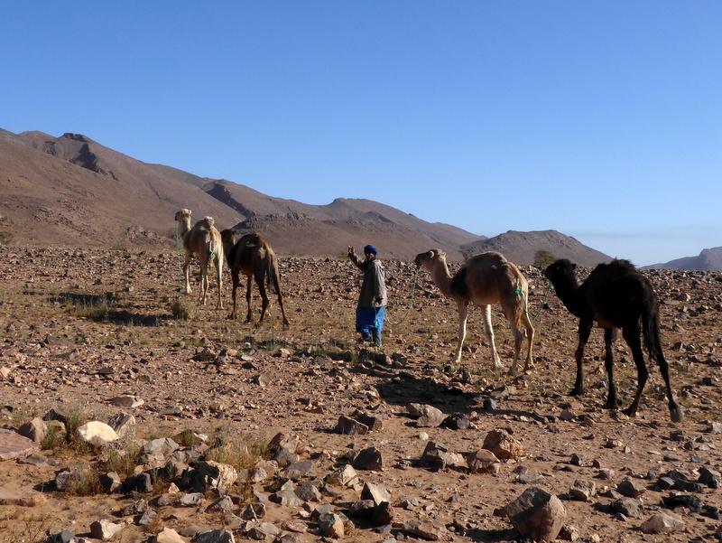 Maroc le sud P1240411