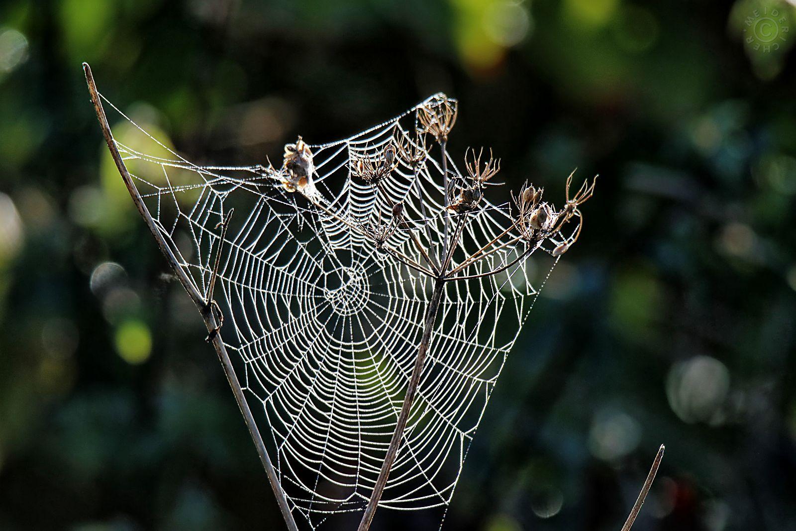 Spinnweben im Herbst 215