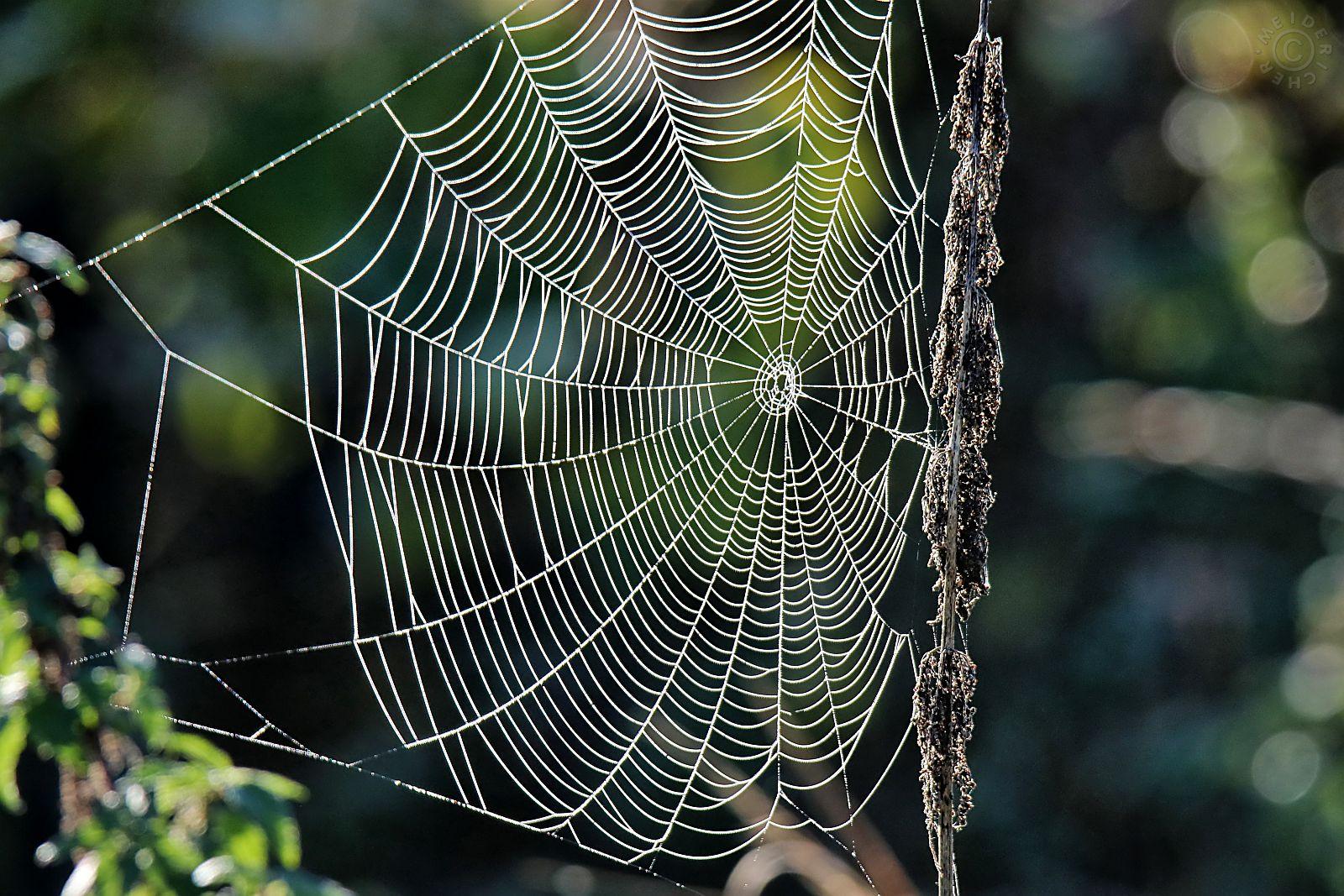 Spinnweben im Herbst 315