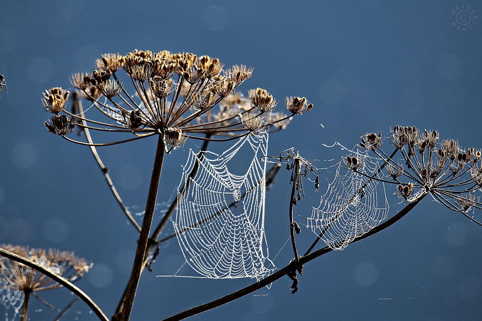 Spinnweben im Herbst 416