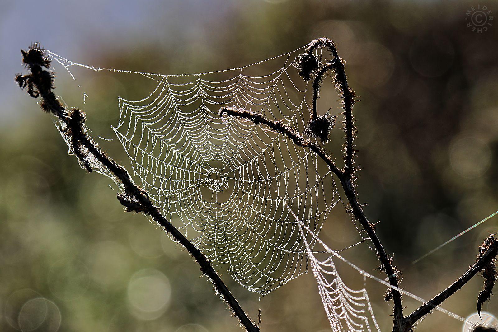 Spinnweben im Herbst 516