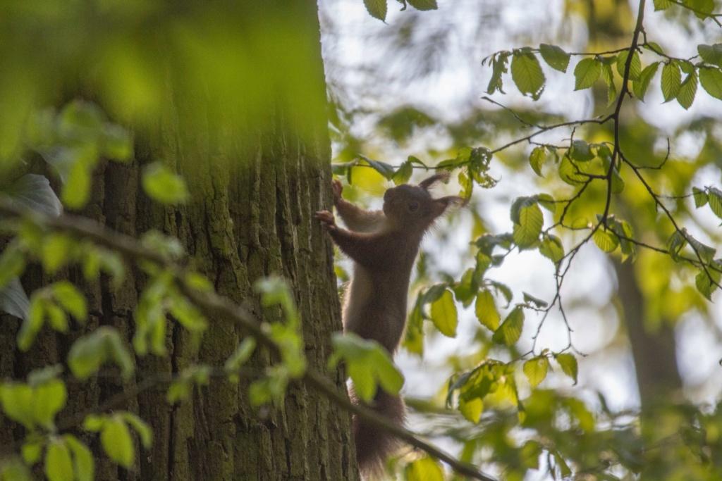 Forêt de Nieppe  Forzot22