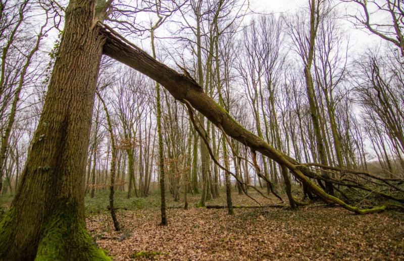 Forêt de Nieppe  Forzot32