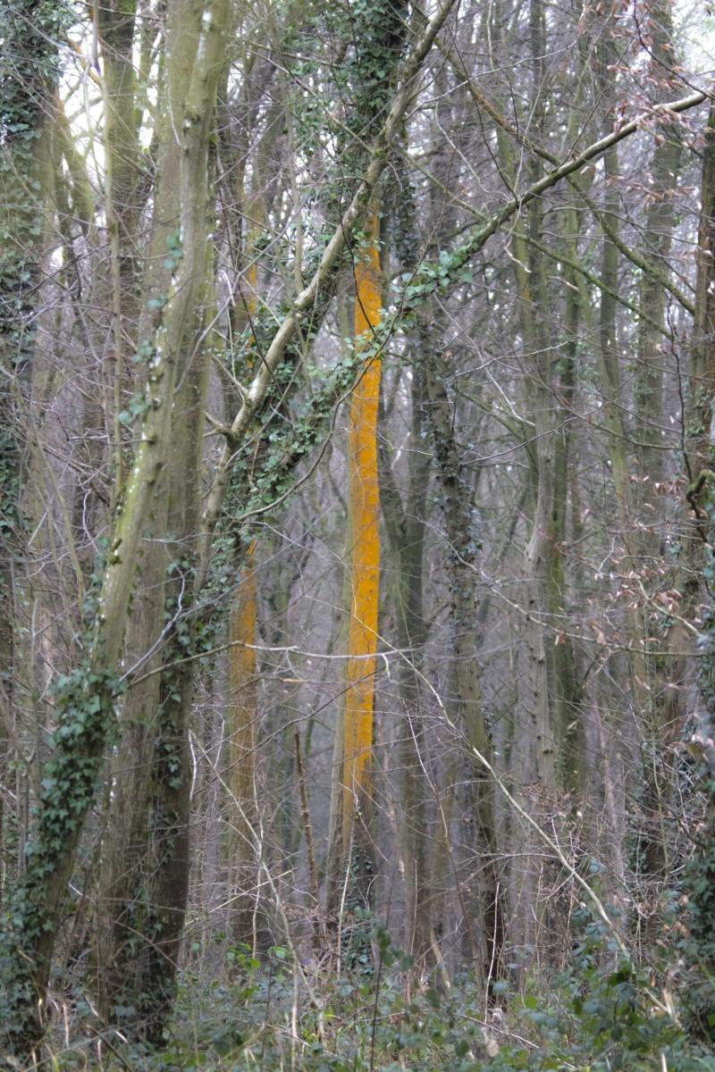 Forêt de Nieppe  Forzot34