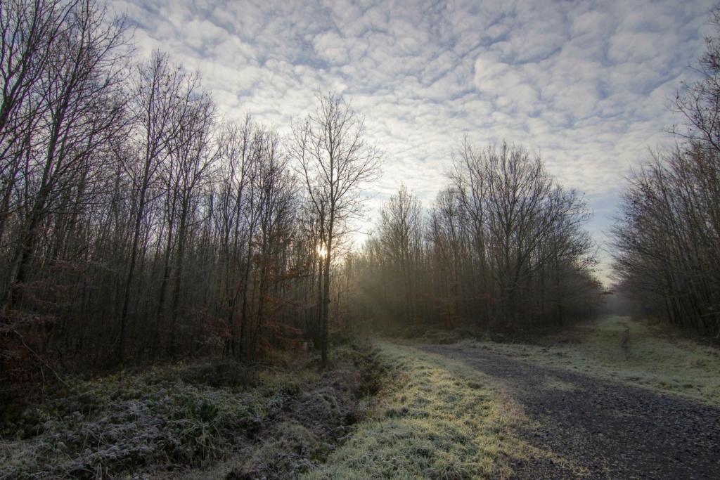 Forêt de Nieppe lumière matinale Forzot60