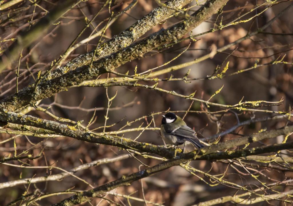 oiseaux Forzot64