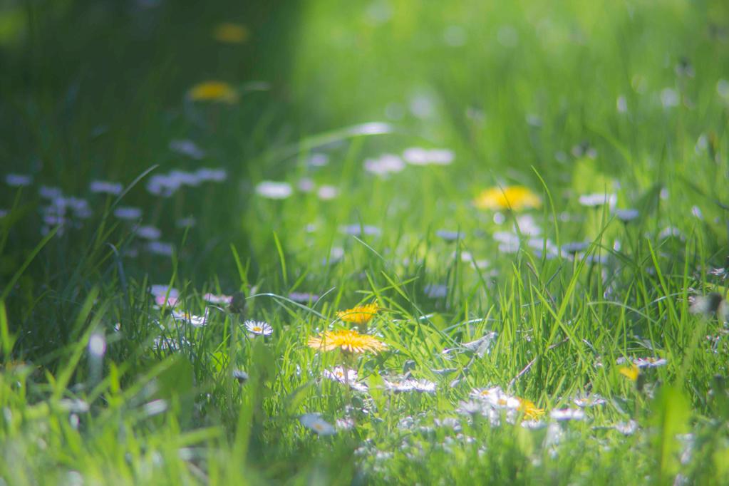 photos jardin Jardin11