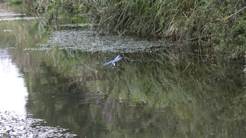 le pêcheur en train de pêcher  Le_par15