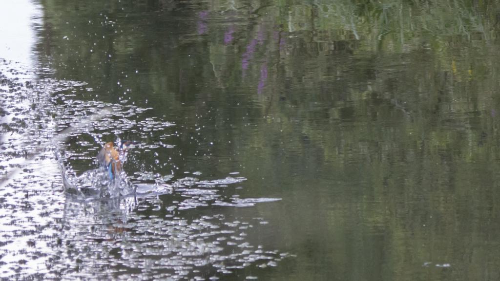 le pêcheur en train de pêcher  Le_par17