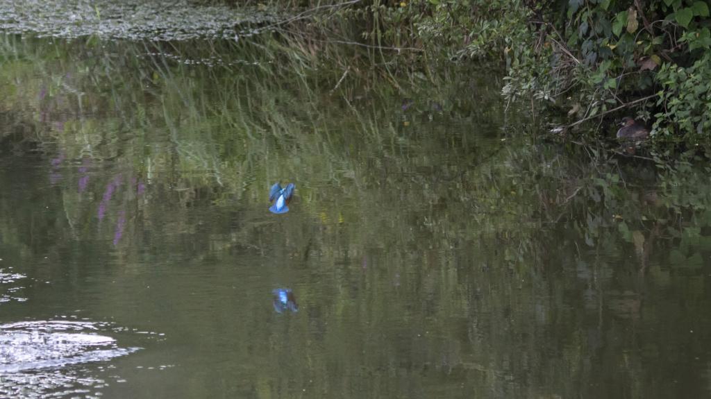 le pêcheur en train de pêcher  Le_par18