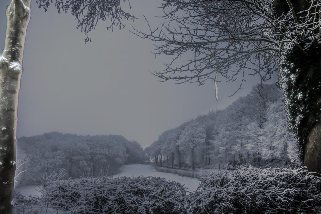 neige le 16 01 19 Neige_12