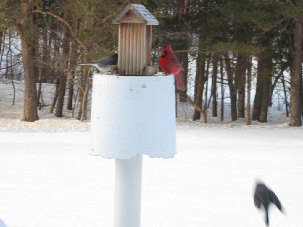 Bird Houses anyone? Birds_10
