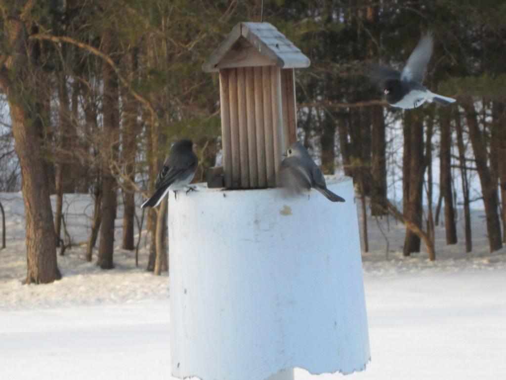 Bird Houses anyone? Birds_11