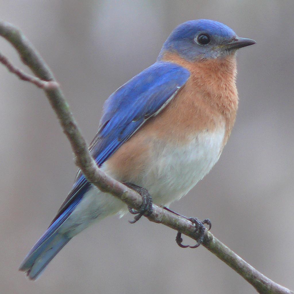 Bird feeder, new visitor Easter10