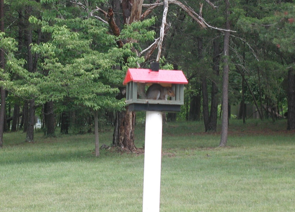 Bird feeder, new visitor P1010335