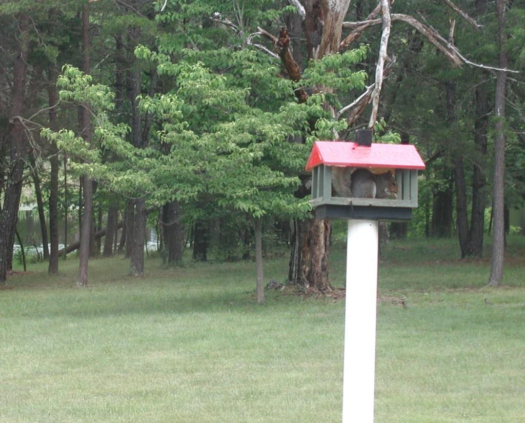 Bird feeder, new visitor P1010336