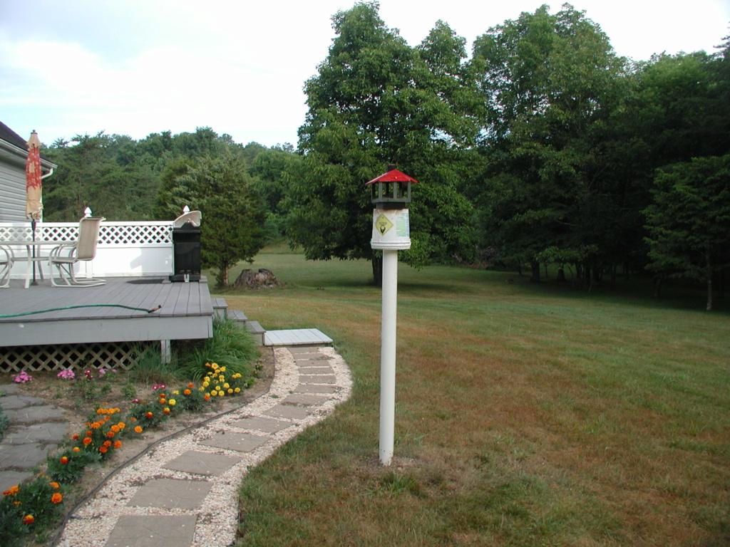 Bird feeder, new visitor P1010359