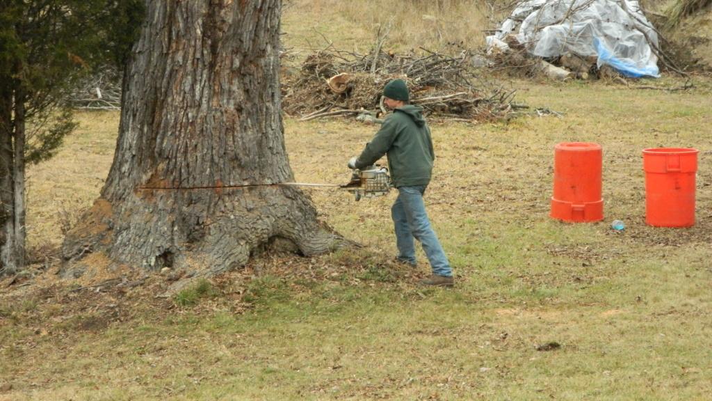 Stumped...................... Tree_d18