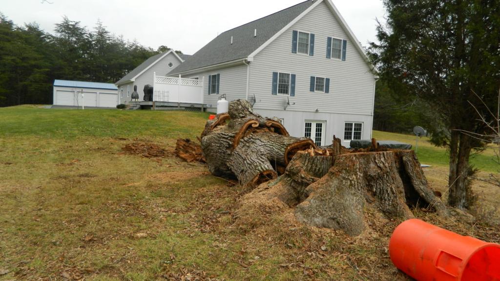 Stumped...................... Tree_d19