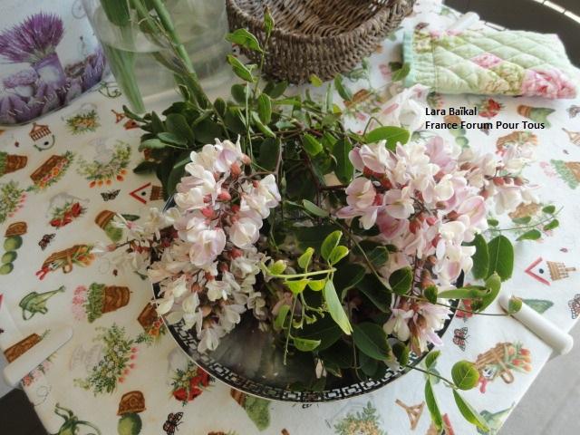 Cuisinez les fleurs -  Fleurs d'acacia 0081111