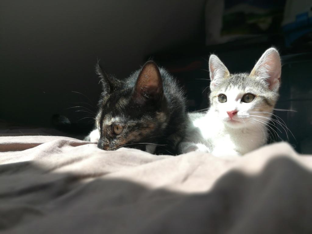 Oural, chaton blanc et gris, né le 07/05/2018 Img_2035
