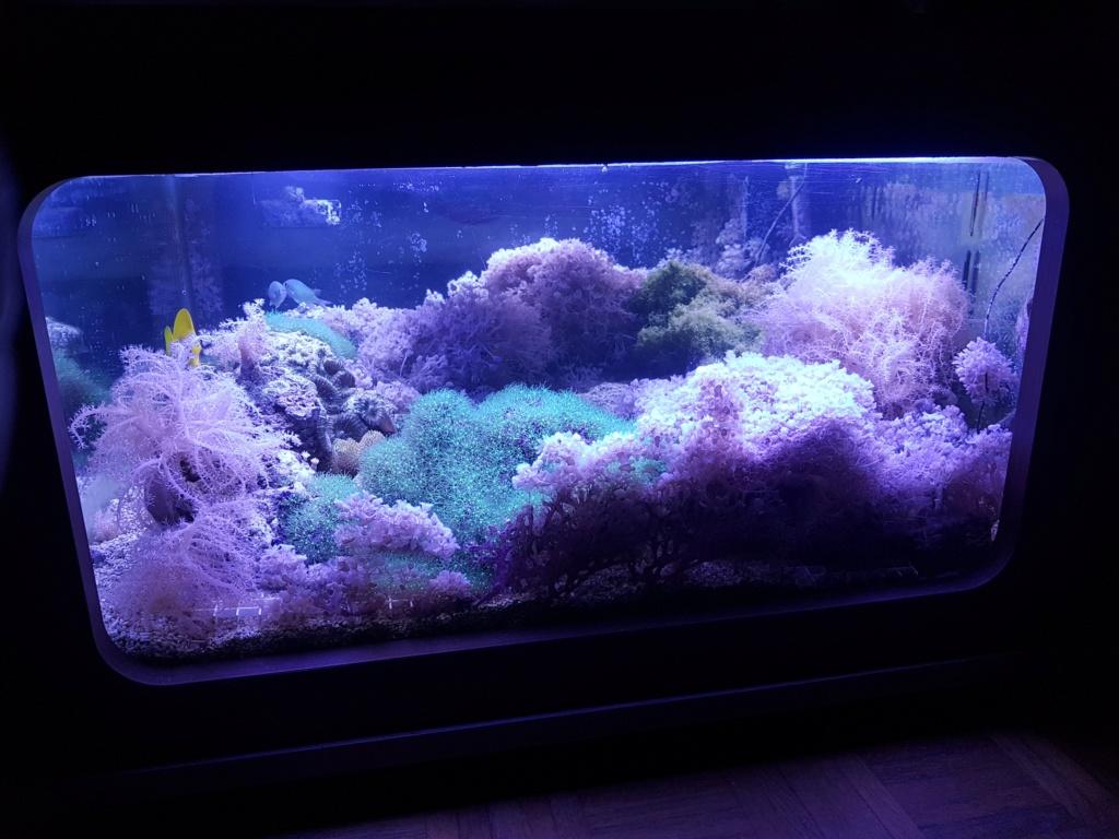 Mon aquarium de Toulouse. 360L Table basse - Page 3 20190611